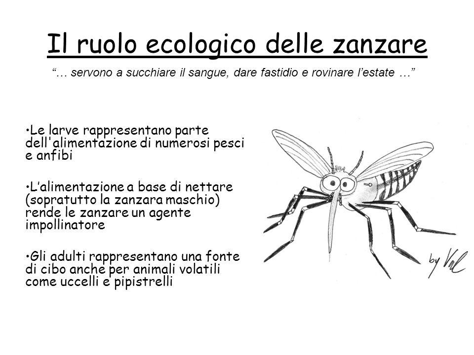 Il ruolo ecologico delle zanzare