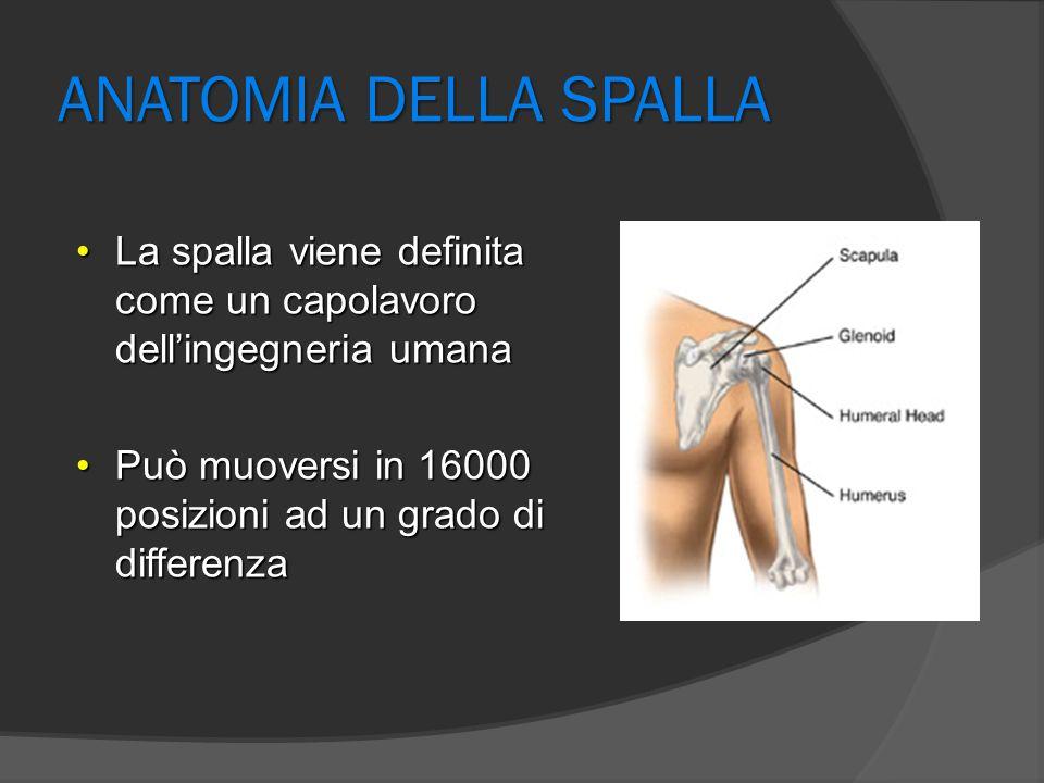 ANATOMIA DELLA SPALLA La spalla viene definita come un capolavoro dell'ingegneria umana.