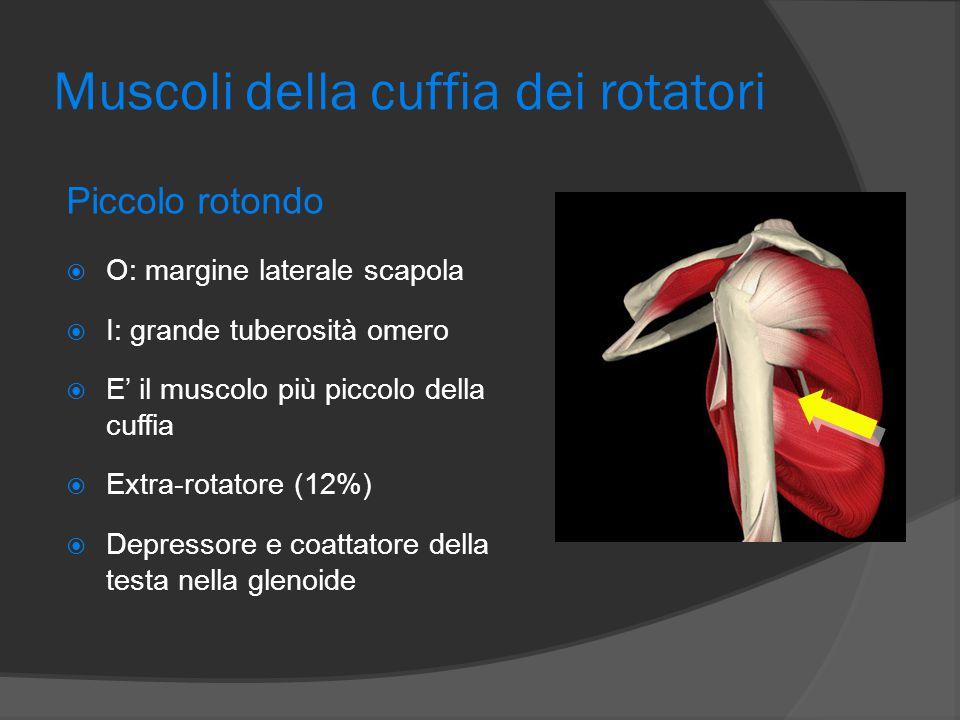 Muscoli della cuffia dei rotatori