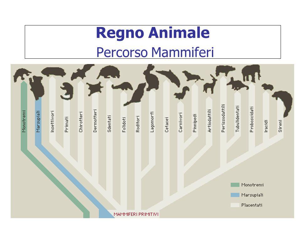 Regno Animale Percorso Mammiferi