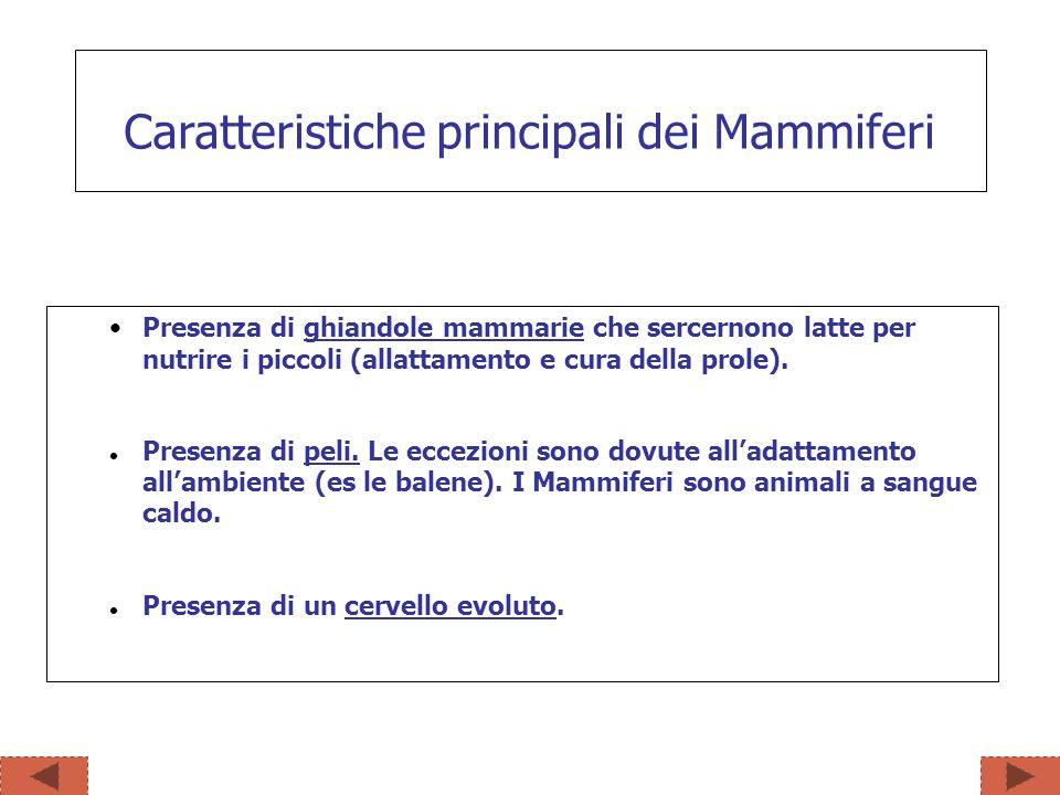 Caratteristiche principali dei Mammiferi