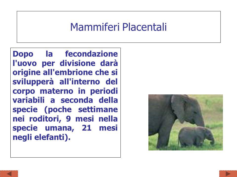 Mammiferi Placentali