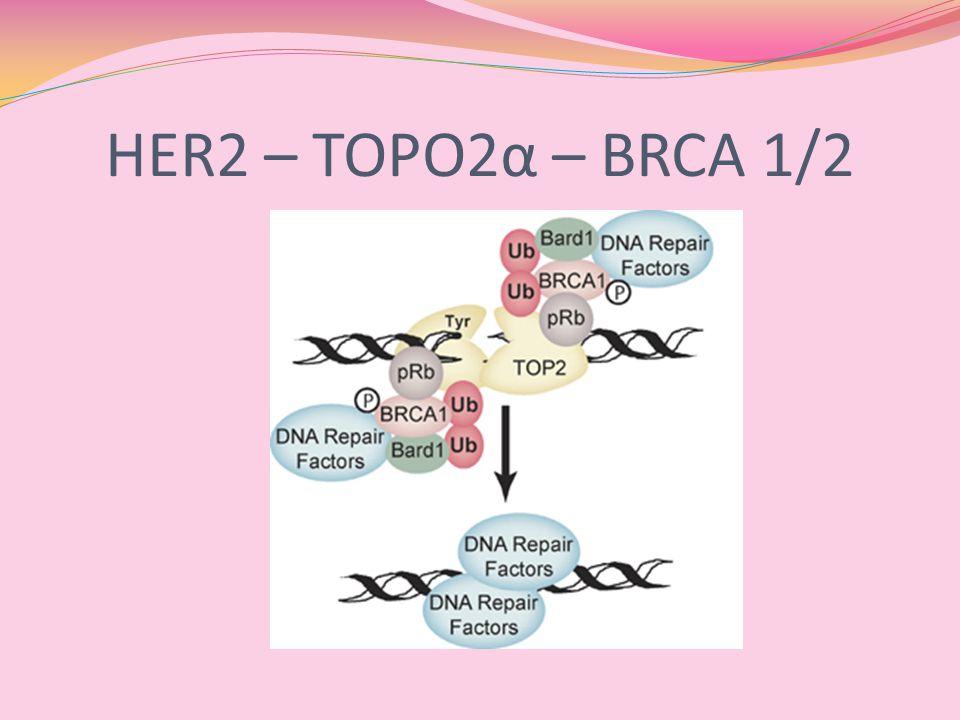 HER2 – TOPO2α – BRCA 1/2
