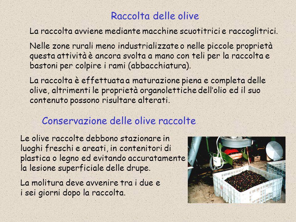 Conservazione delle olive raccolte