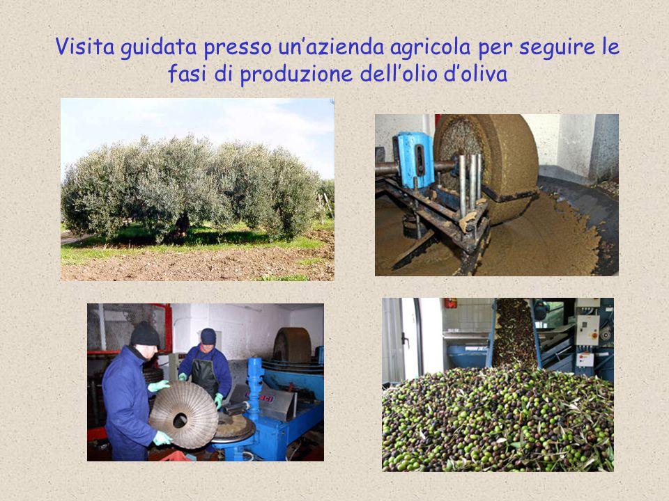 Visita guidata presso un'azienda agricola per seguire le fasi di produzione dell'olio d'oliva