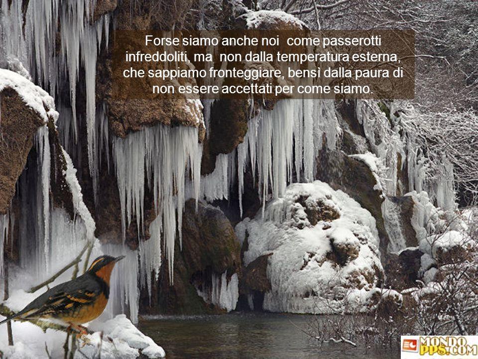 Forse siamo anche noi come passerotti infreddoliti, ma non dalla temperatura esterna, che sappiamo fronteggiare, bensì dalla paura di non essere accettati per come siamo.