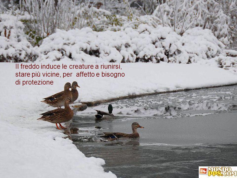 Il freddo induce le creature a riunirsi,