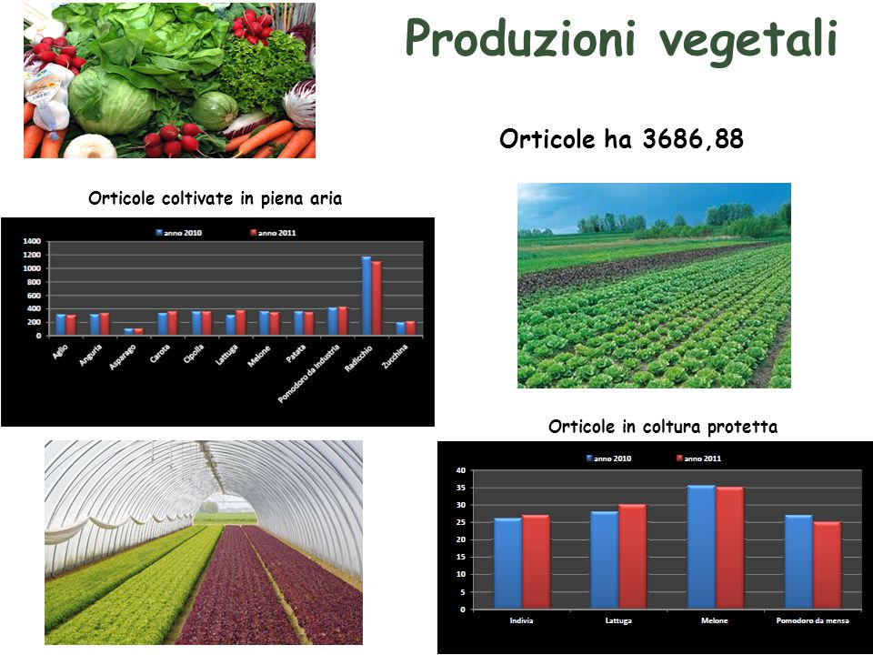 Produzioni vegetali Orticole ha 3686,88