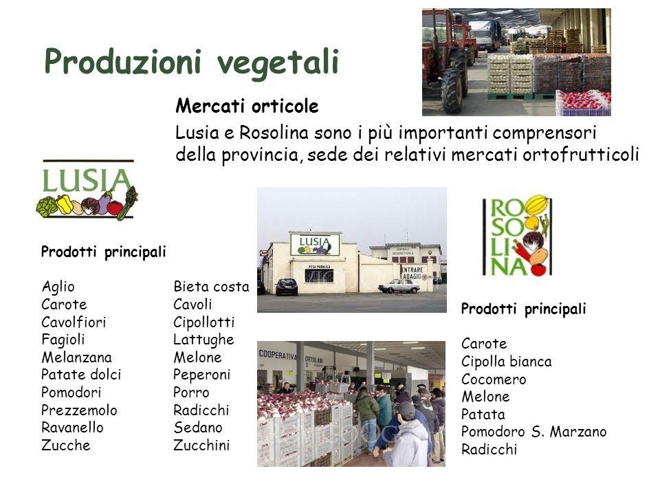 Produzioni vegetali Mercati orticole Lusia e Rosolina sono i più importanti comprensori della provincia, sede dei relativi mercati ortofrutticoli