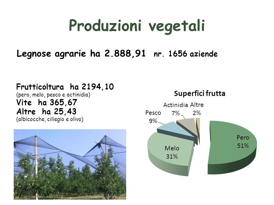 Produzioni vegetali Legnose agrarie ha 2.888,91 nr. 1656 aziende