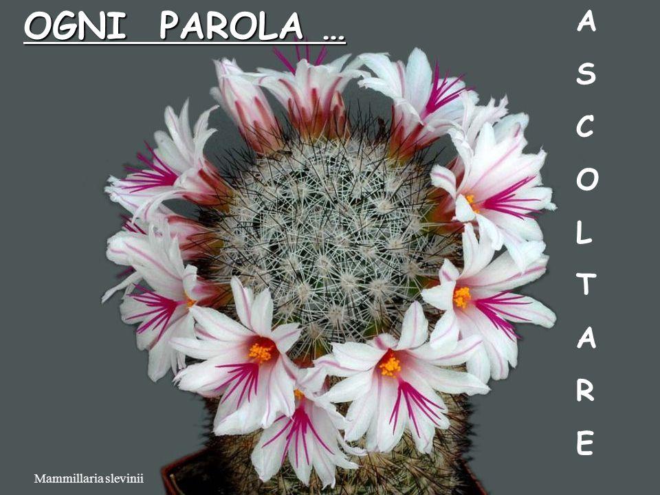 OGNI PAROLA … A S C O L T R E Mammillaria slevinii