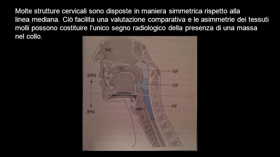Molte strutture cervicali sono disposte in maniera simmetrica rispetto alla