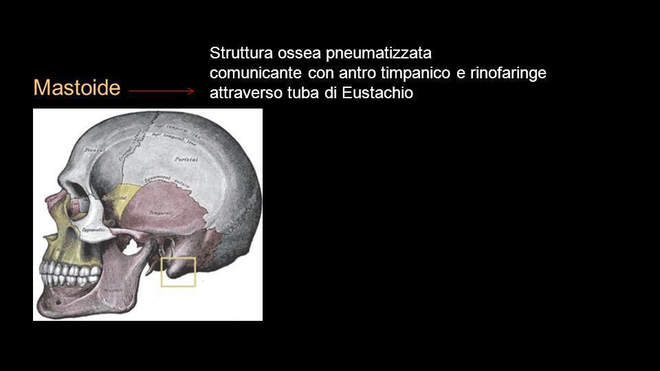 Mastoide Struttura ossea pneumatizzata
