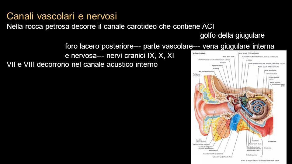 Canali vascolari e nervosi