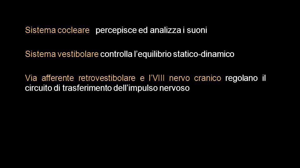 Sistema cocleare percepisce ed analizza i suoni Sistema vestibolare controlla l'equilibrio statico-dinamico Via afferente retrovestibolare e l'VIII nervo cranico regolano il circuito di trasferimento dell'impulso nervoso