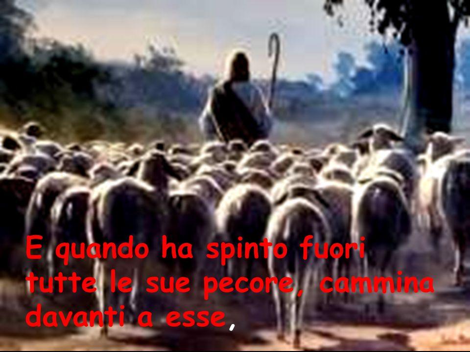 E quando ha spinto fuori tutte le sue pecore, cammina davanti a esse,