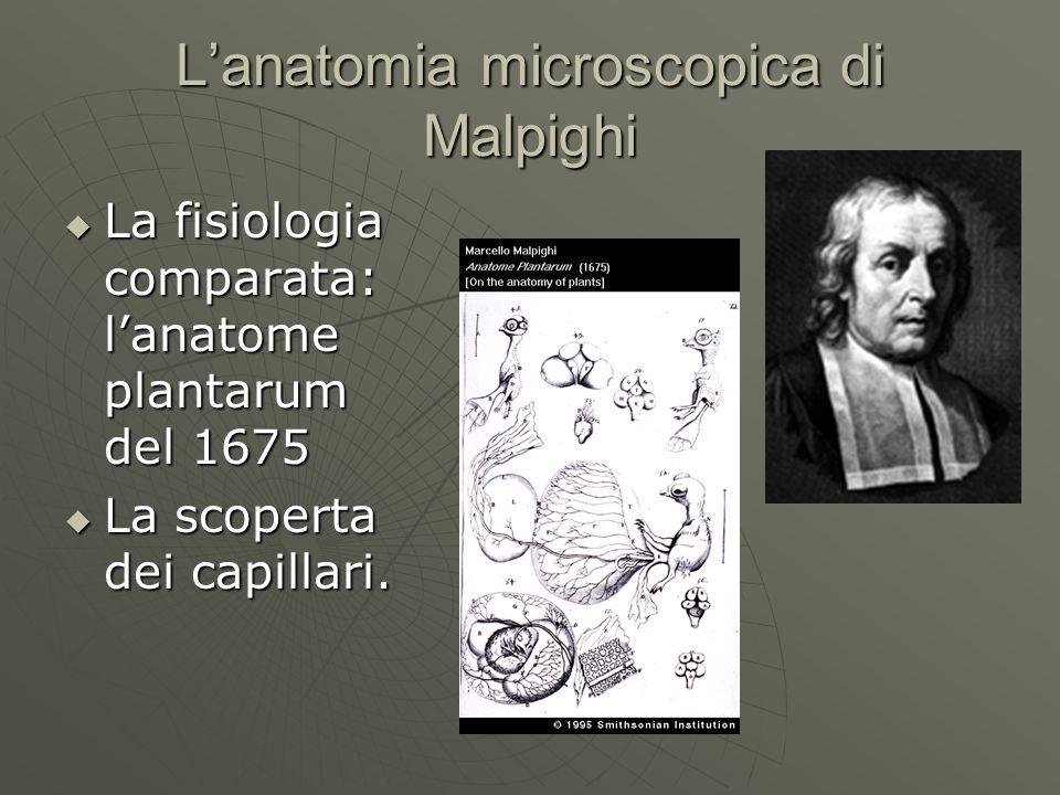 L'anatomia microscopica di Malpighi