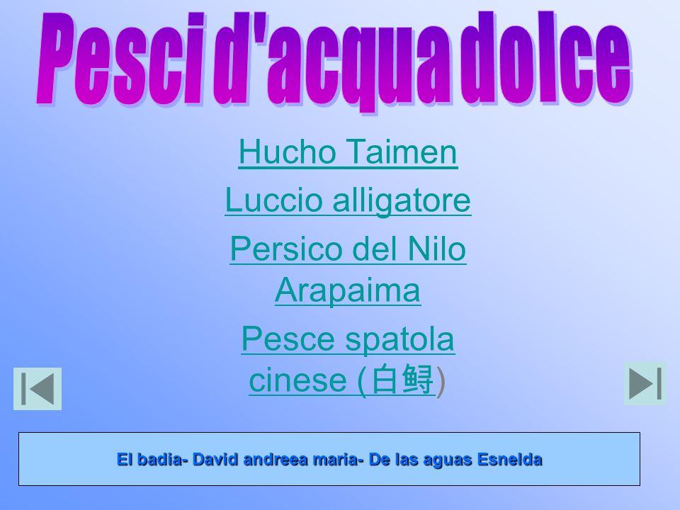 El badia- David andreea maria- De las aguas Esnelda