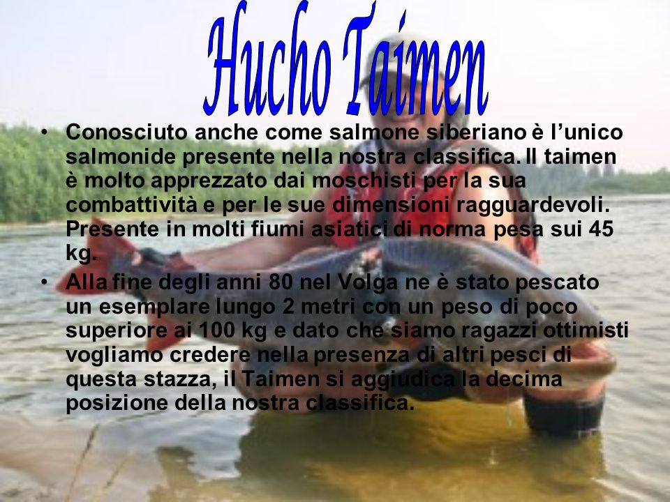 Hucho Taimen
