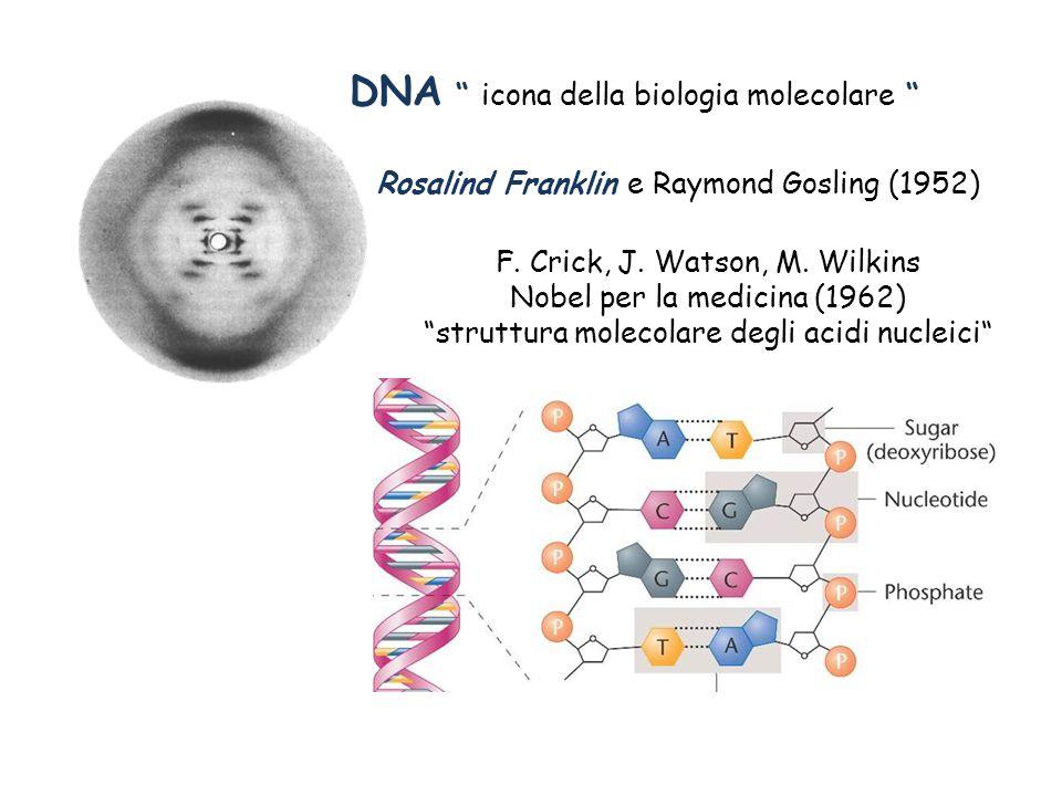DNA icona della biologia molecolare