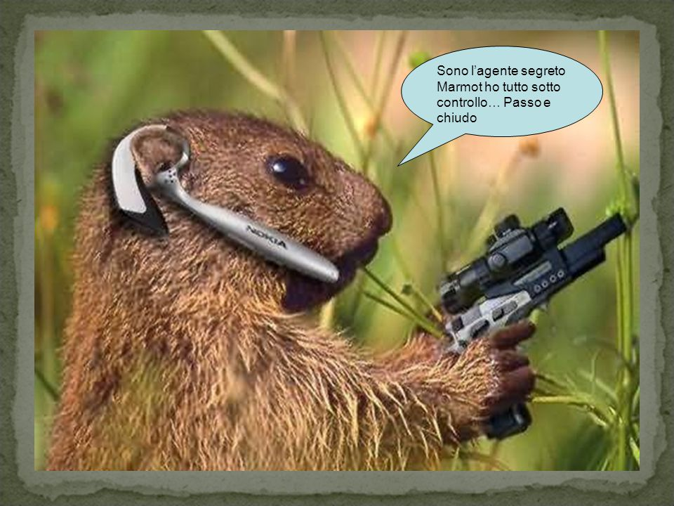 Sono l'agente segreto Marmot ho tutto sotto controllo… Passo e chiudo