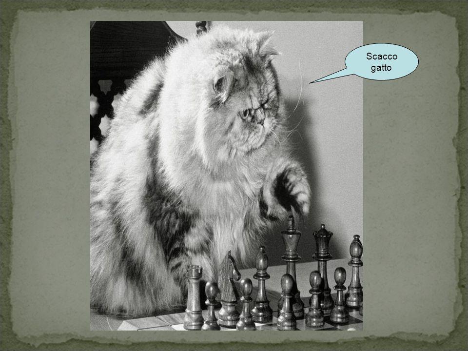 Scacco gatto