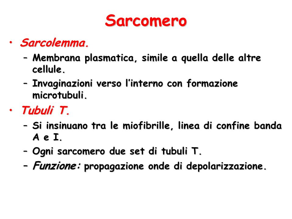Sarcomero Sarcolemma. Tubuli T.