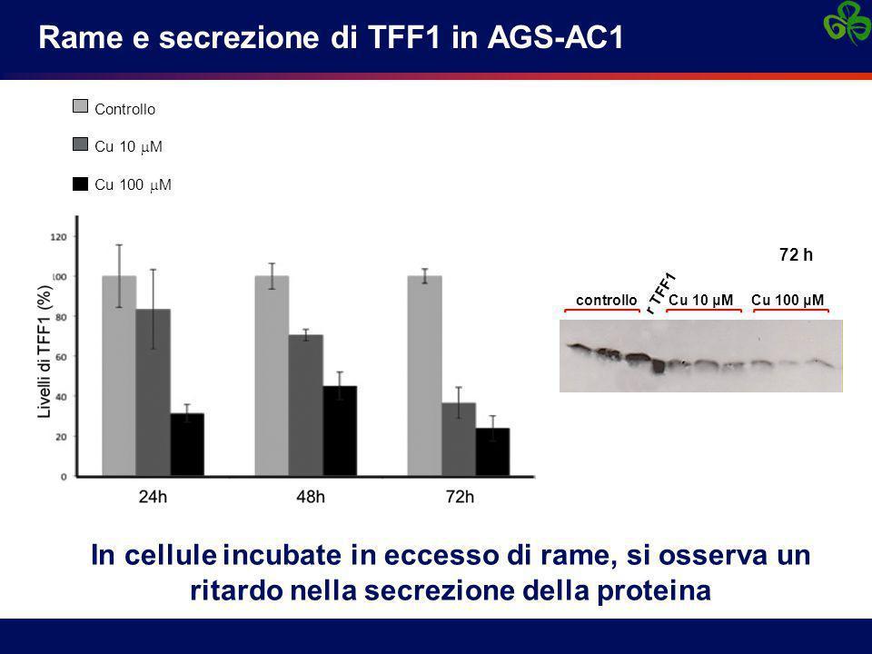 Rame e secrezione di TFF1 in AGS-AC1