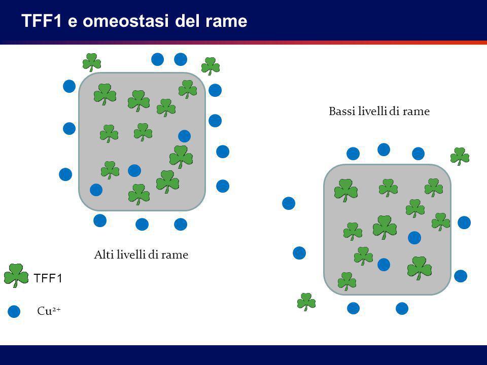 TFF1 e omeostasi del rame