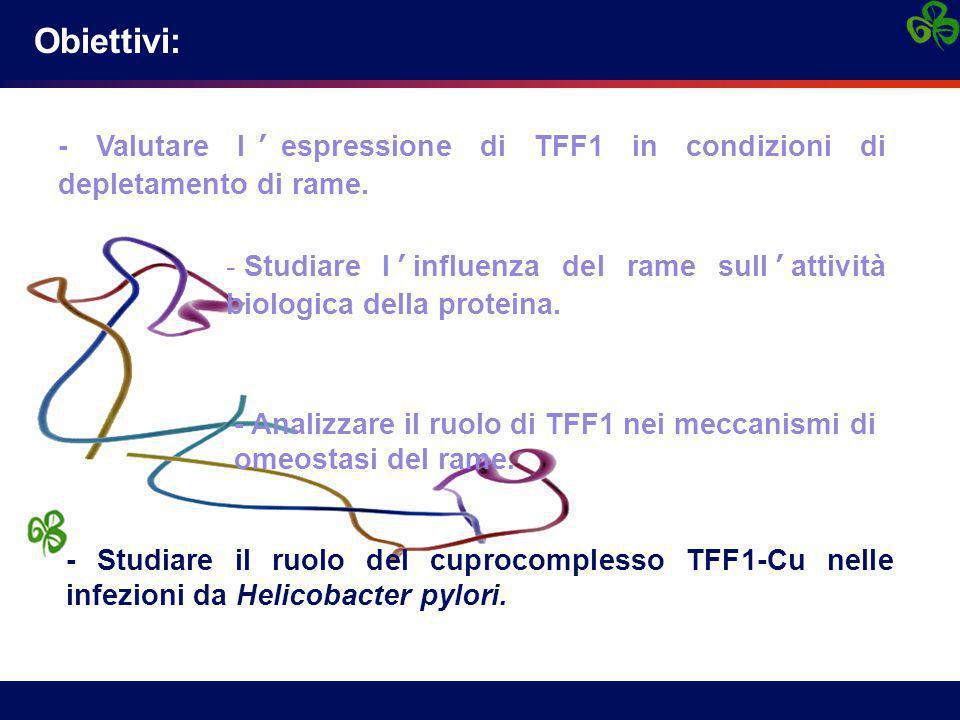 Obiettivi: - Valutare l'espressione di TFF1 in condizioni di depletamento di rame.