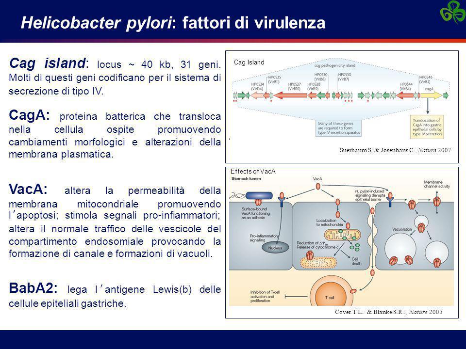 Helicobacter pylori: fattori di virulenza