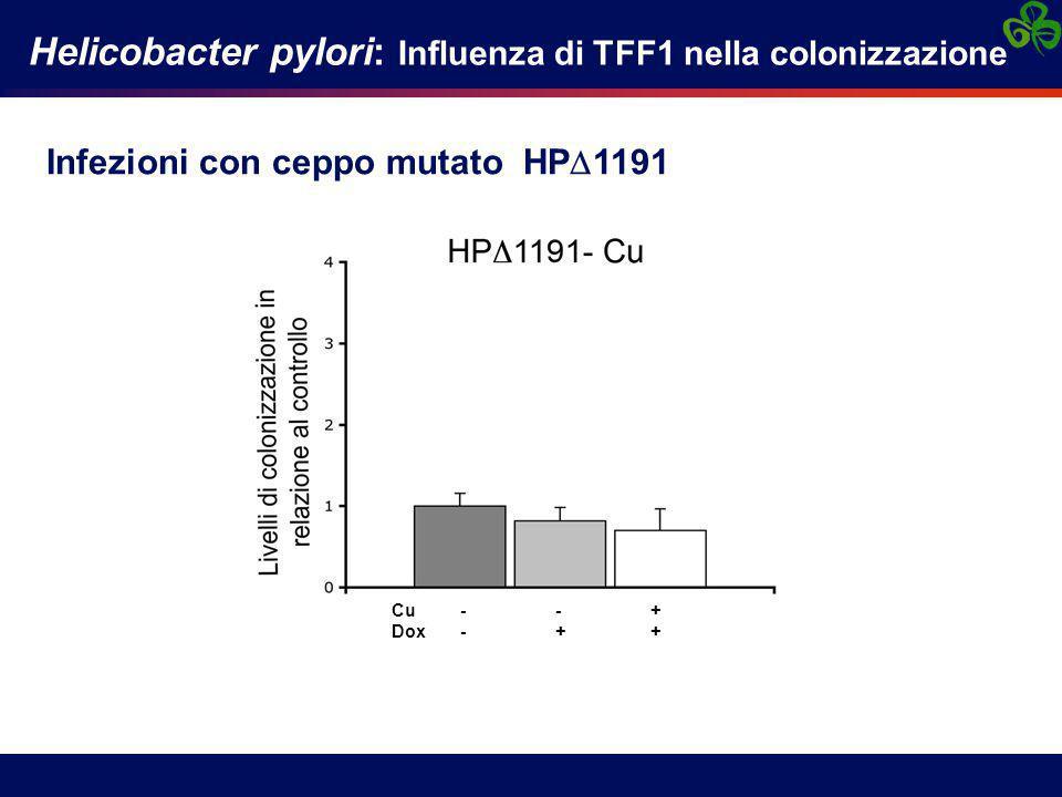 Helicobacter pylori: Influenza di TFF1 nella colonizzazione