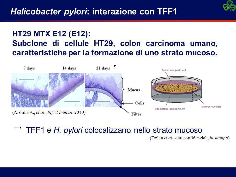 Helicobacter pylori: interazione con TFF1