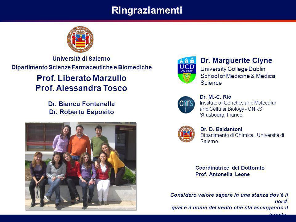 Ringraziamenti Prof. Liberato Marzullo Prof. Alessandra Tosco