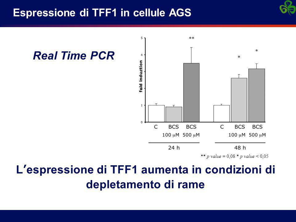 L'espressione di TFF1 aumenta in condizioni di depletamento di rame
