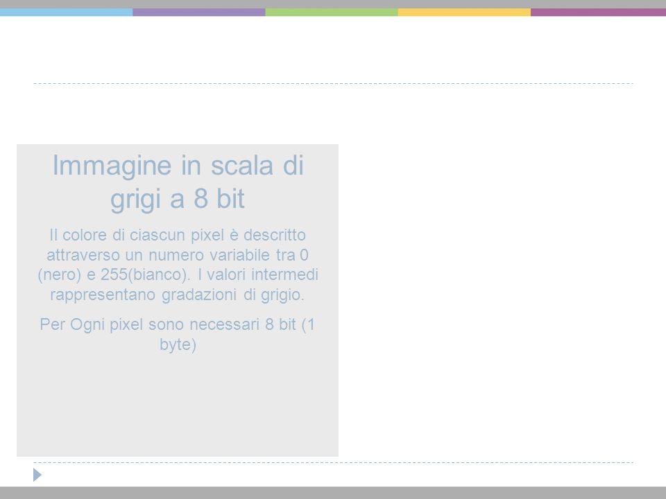 Immagine in scala di grigi a 8 bit