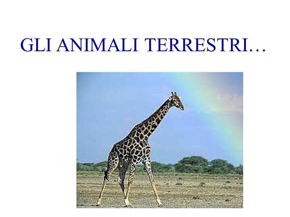 GLI ANIMALI TERRESTRI…