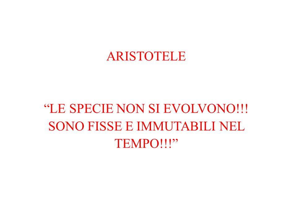 LE SPECIE NON SI EVOLVONO!!! SONO FISSE E IMMUTABILI NEL TEMPO!!!