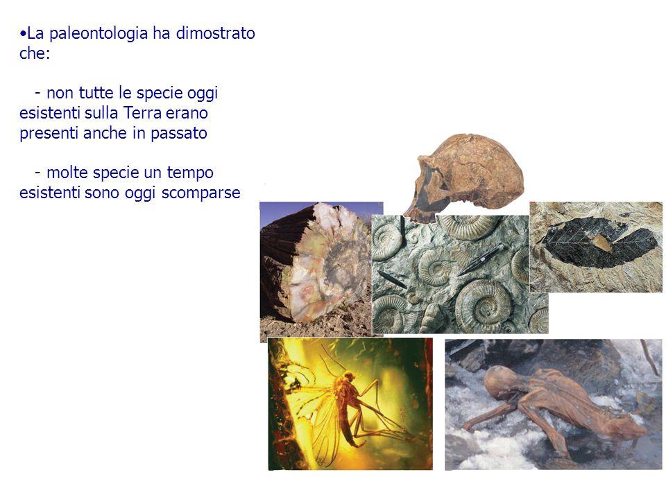 La paleontologia ha dimostrato