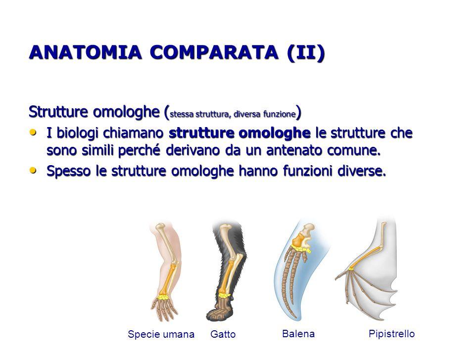 ANATOMIA COMPARATA (II)