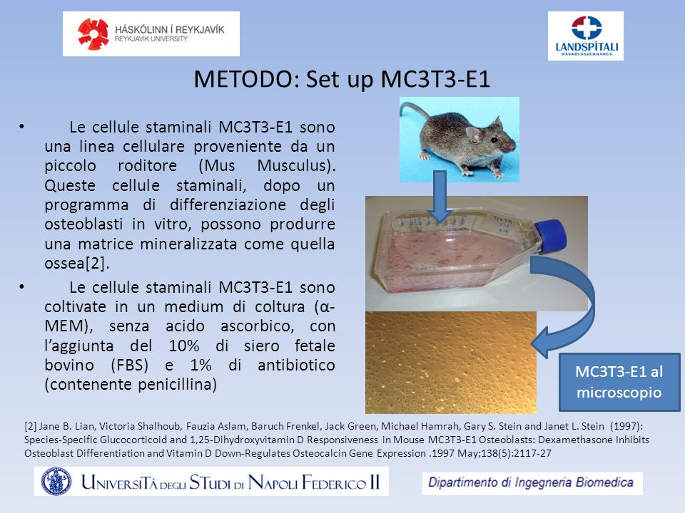METODO: Set up MC3T3-E1