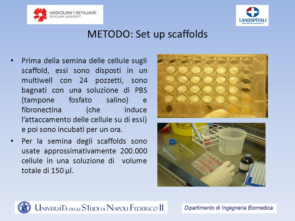 METODO: Set up scaffolds