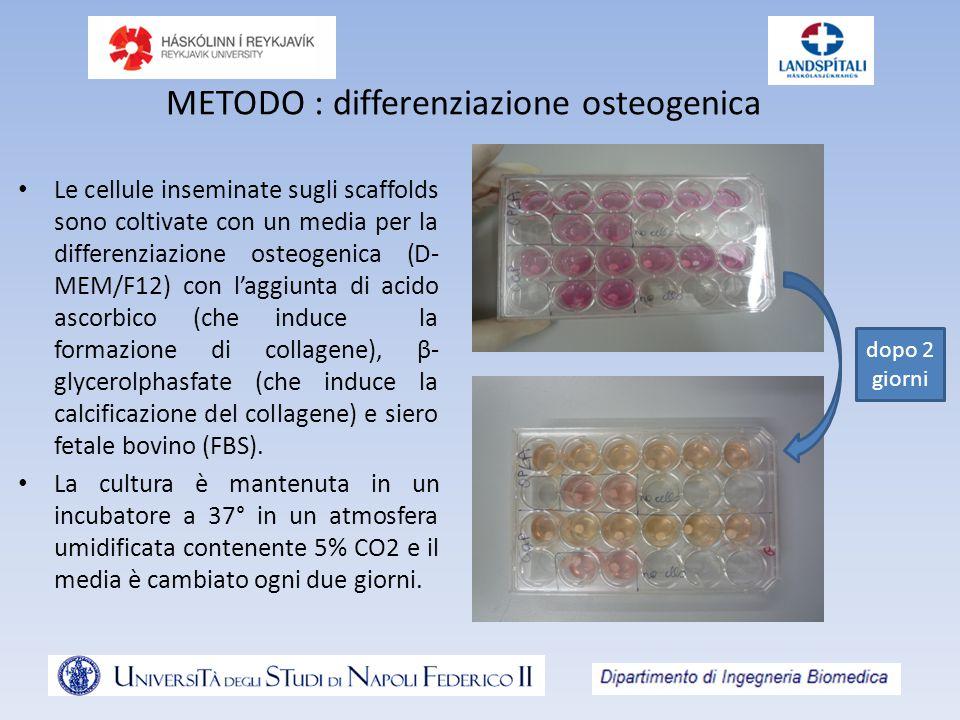 METODO : differenziazione osteogenica