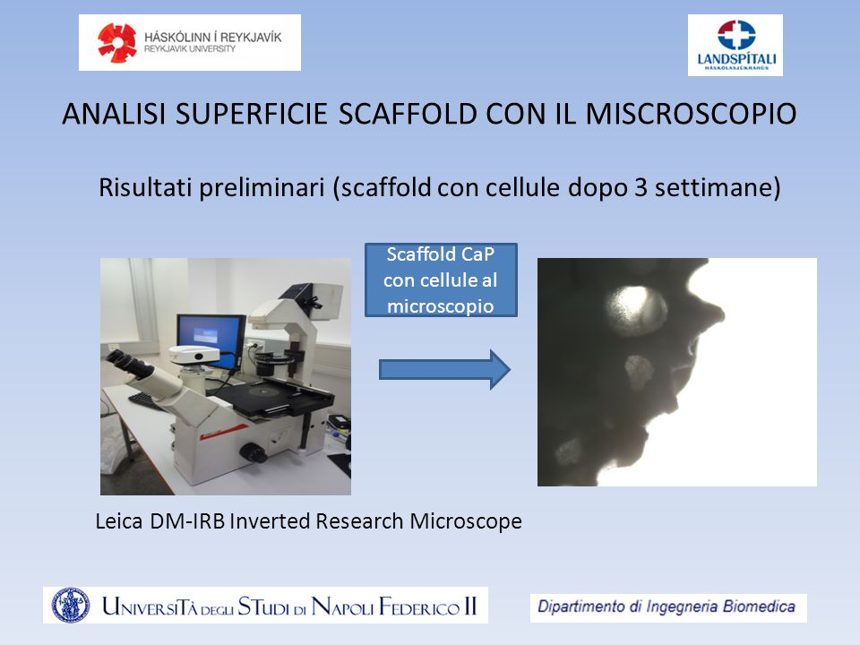 ANALISI SUPERFICIE SCAFFOLD CON IL MISCROSCOPIO