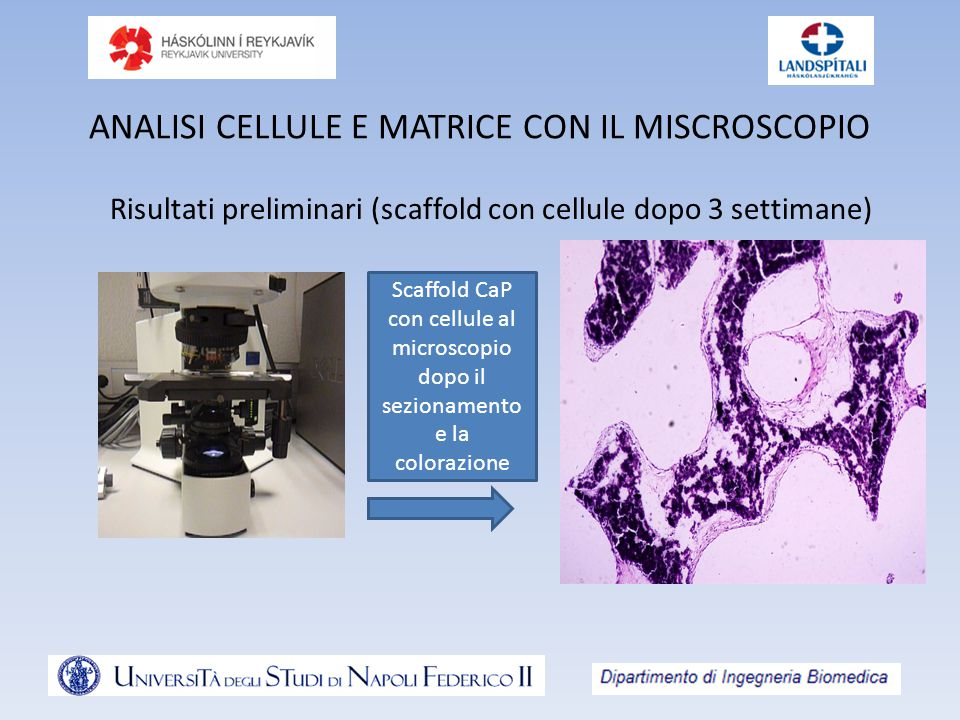 ANALISI CELLULE E MATRICE CON IL MISCROSCOPIO