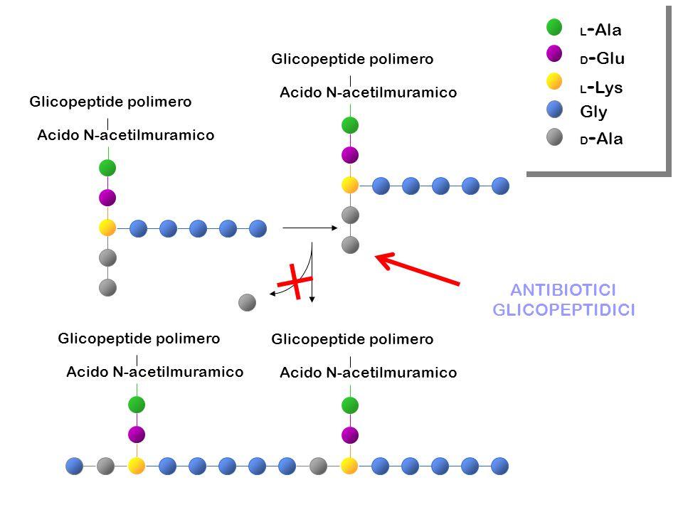Gly ANTIBIOTICI GLICOPEPTIDICI Glicopeptide polimero