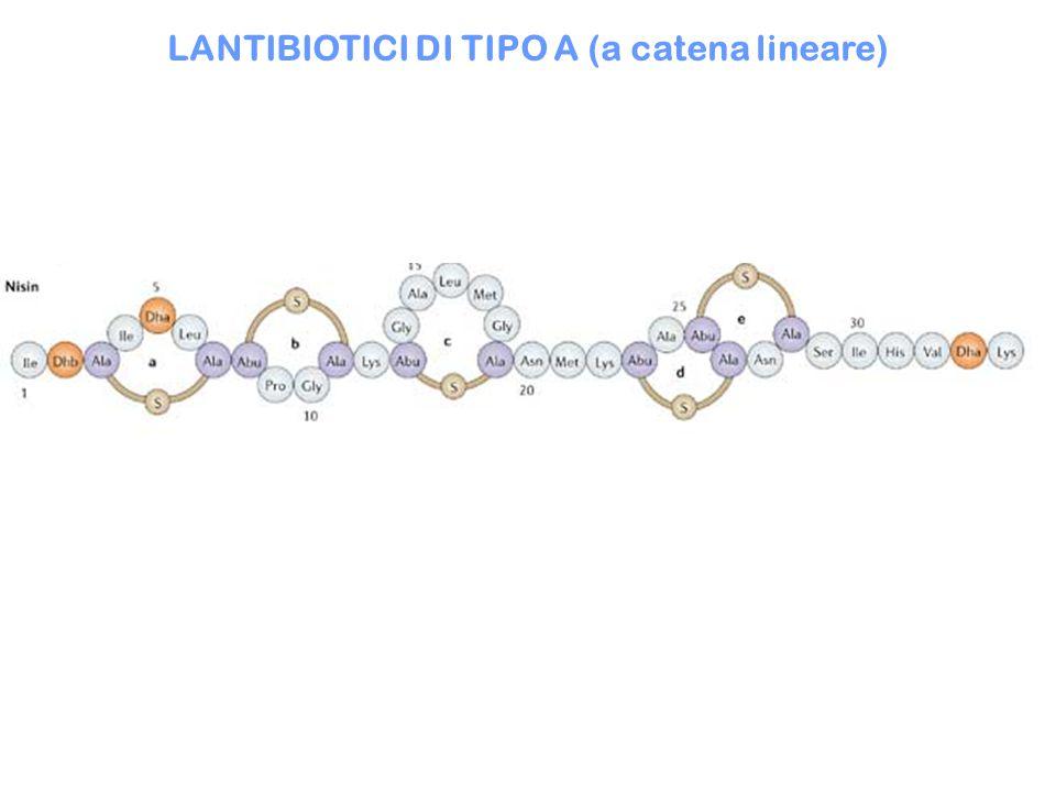 LANTIBIOTICI DI TIPO A (a catena lineare)