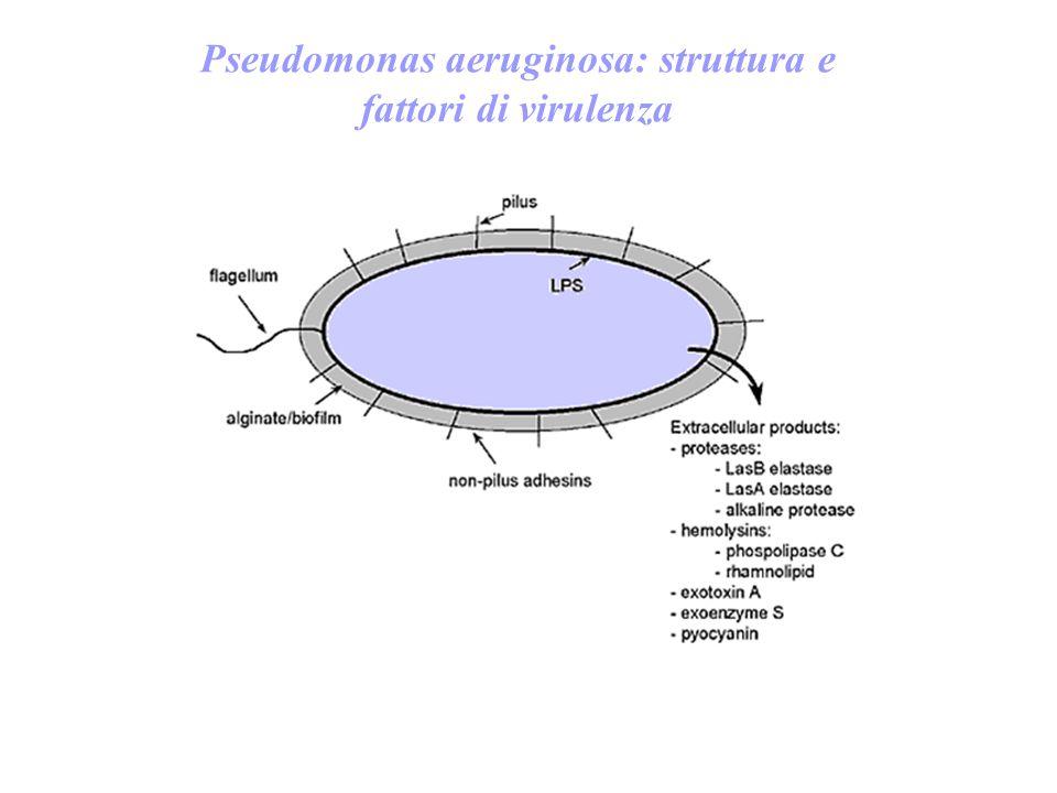 Pseudomonas aeruginosa: struttura e