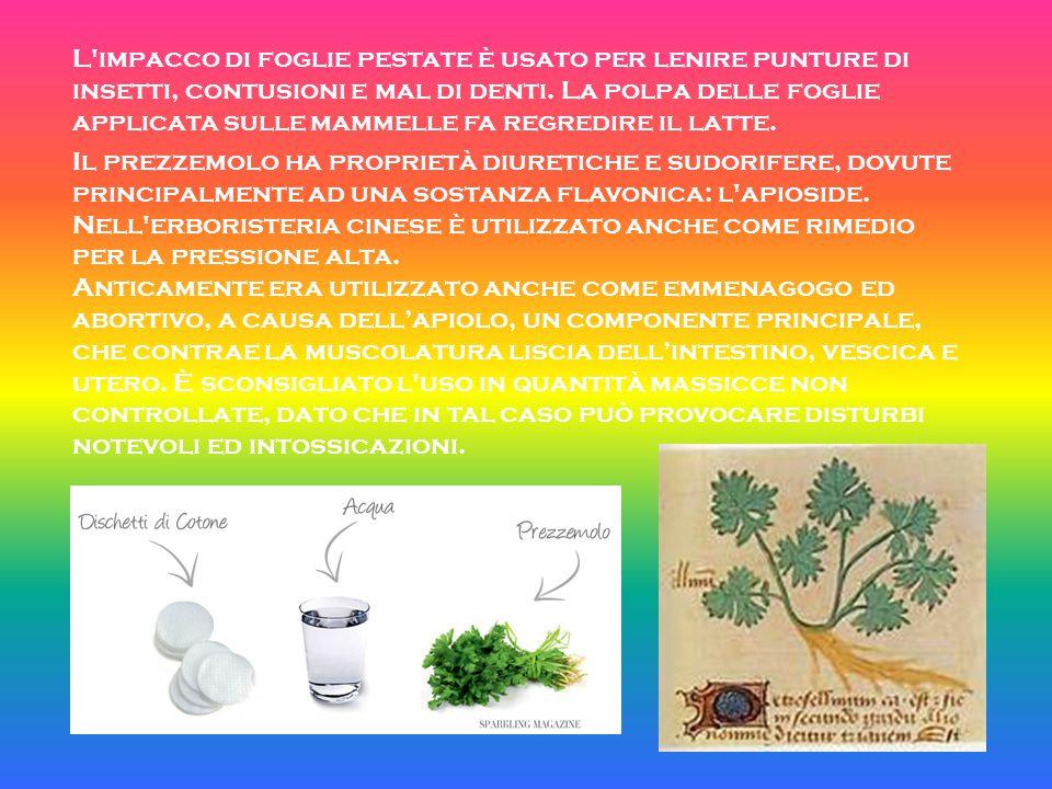 L impacco di foglie pestate è usato per lenire punture di insetti, contusioni e mal di denti. La polpa delle foglie applicata sulle mammelle fa regredire il latte.