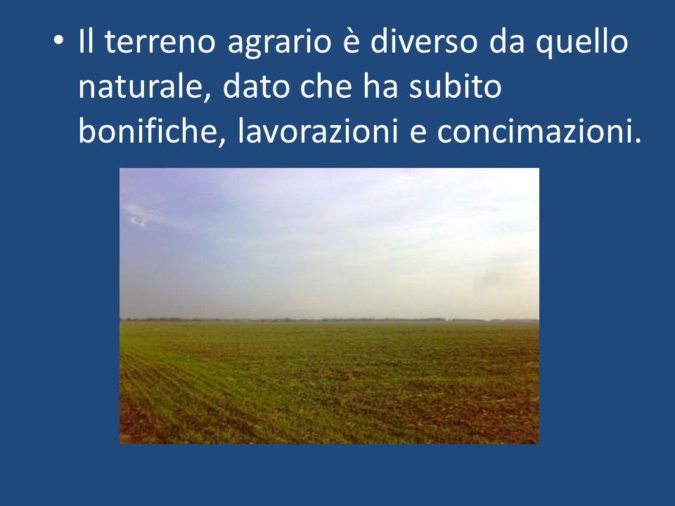 Il terreno agrario è diverso da quello naturale, dato che ha subito bonifiche, lavorazioni e concimazioni.
